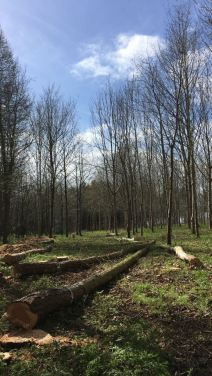 New Track Being Put Into A Woodland